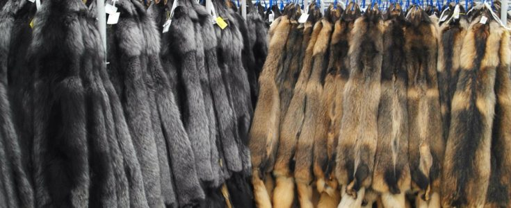 Desperate Saga Furs Moves Fur Auction Online With Humiliating Results