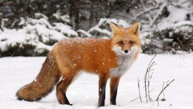 We need a UK fur ban