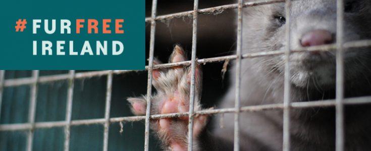 Ireland: Cabinet APRROVES fur farming ban