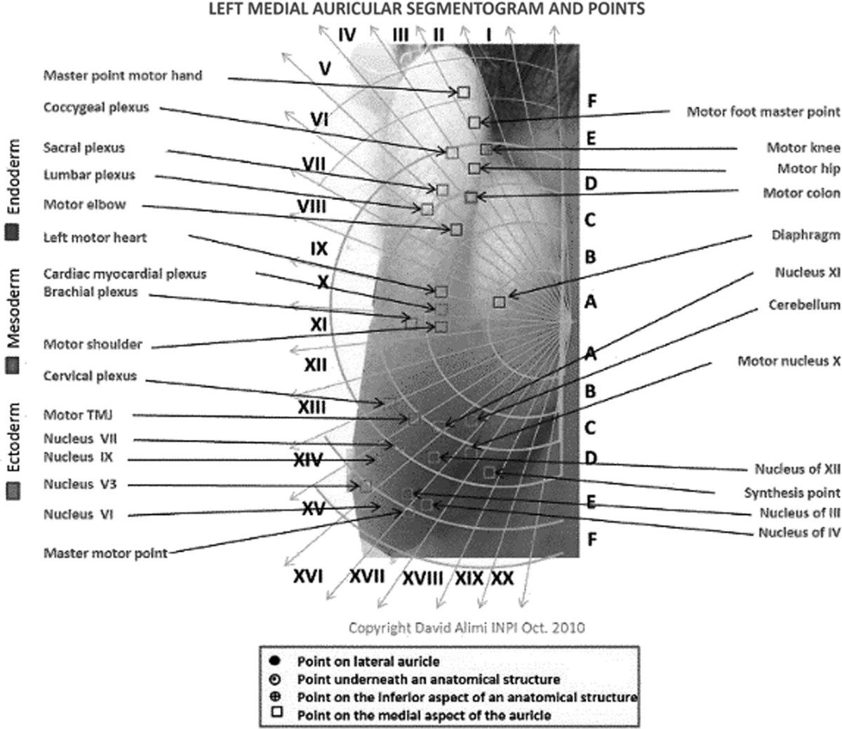 Auricular acupuncture homunculus 6