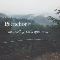 Le secret de l'odeur de la terre après la pluie enfin percé ?