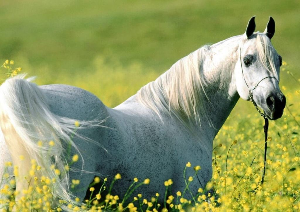 Naturally beautiful: horse skin conditions are treatable