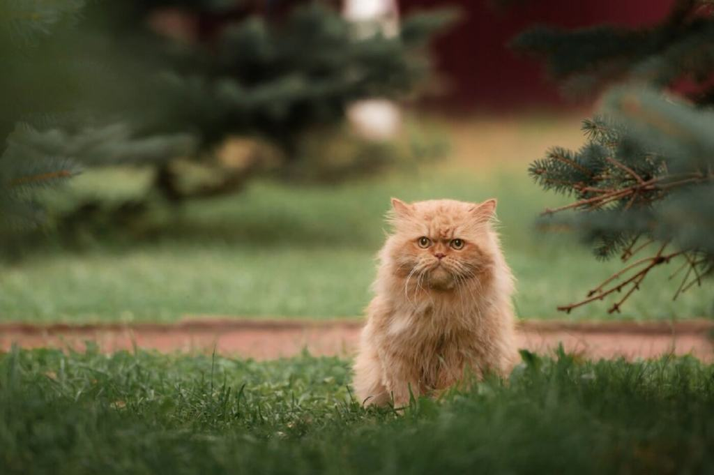 Skin Conditions causing your cat to be grumpy?