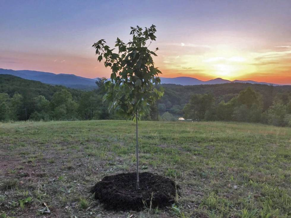 Tree planted in memory of someone
