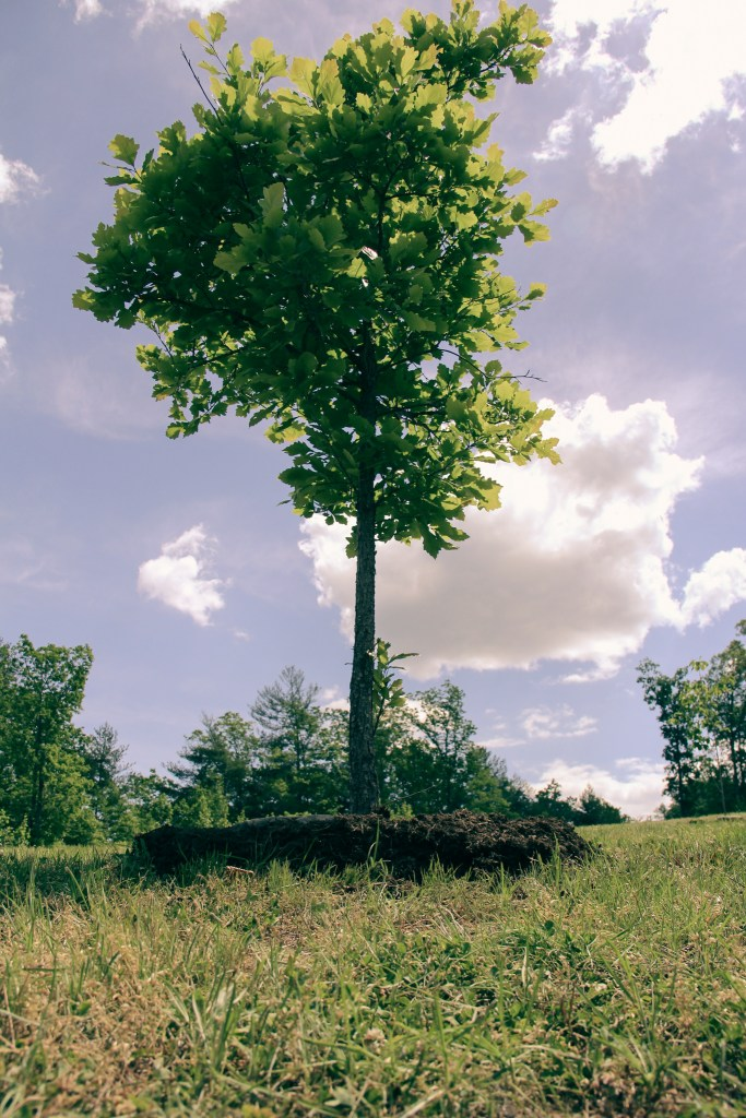 a living tribute tree