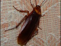insect-inspection-cockroach