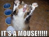 mice-in-home-meme