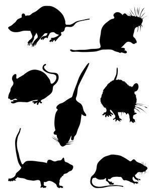 Nassau Rats: A Growing Concern