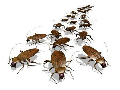 Yes, Fall Pest Control Is Important. Here's Why.