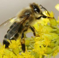 Turning the Spotlight on Stinging Insects