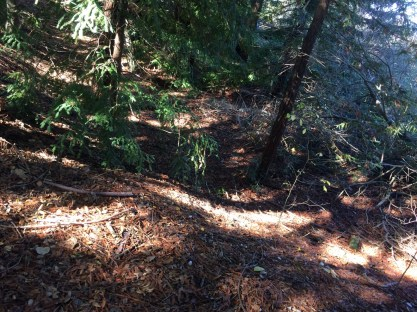 Upstream habitat covered in Redwood litter. Photo by J.Johnston