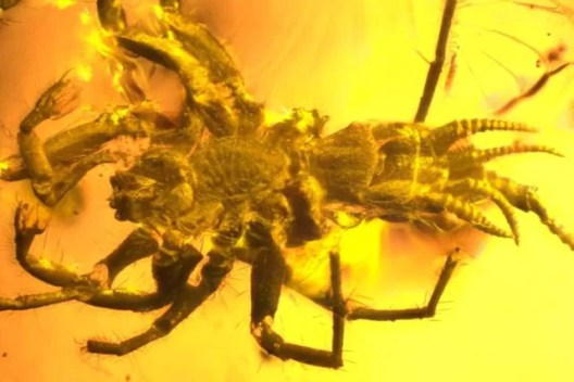 Scorpion-Tailed Spider Chimera Found in Amber