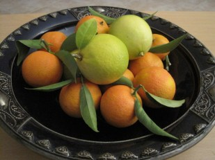 Mingling with the friendly oranges