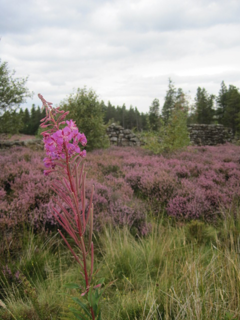 Did I mention the heather?