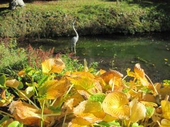 A busy 'heron'