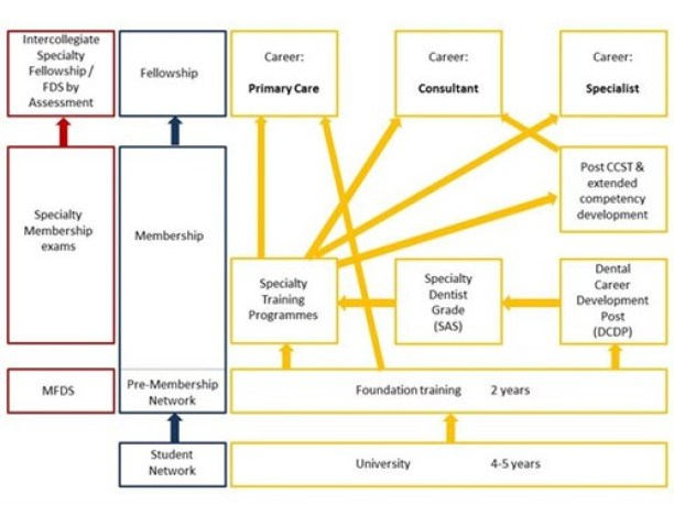 dental-career-path