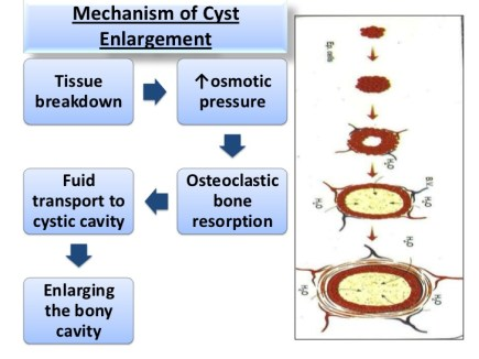 cysts-part-1-9-728
