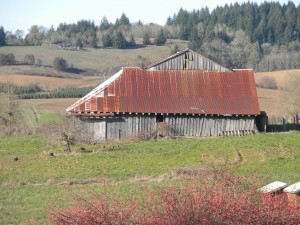 The 1853 Ransom Belknap Barn in Benton County is one of just 23 pioneer barns still standing in the Willamette Valley. Estimates show that in 1865 there were 4, 600 barns in the valley (Photo courtesy BA Beierle).