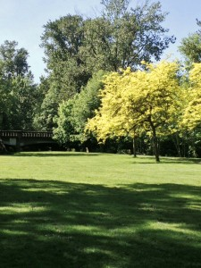 Pringle Park today (Photo courtesy Chris D'Arcy)