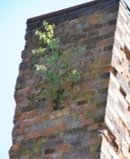 tree growing from chimney (photo courtesy of Menucha Retreat and Conference Center)