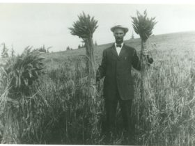 Philip T. Oatfield & his Klondike Wheat 1914-1915