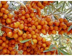 Seaberry-Orange Energy