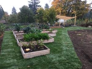 Cedar Raised Garden Beds with Grass and Arbor