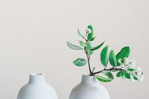 plant-nursery-27