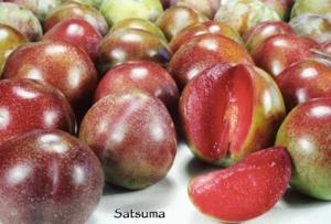 satsuma plum