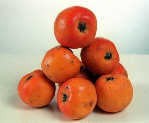 Tejocote red fruit