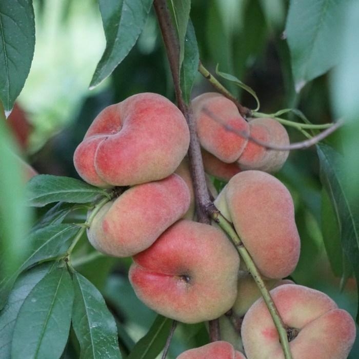 donut peach