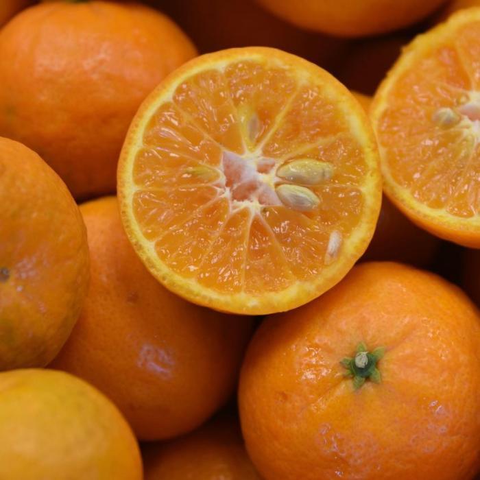 mandarin california honey