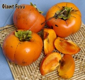 persimmon giant fuyu
