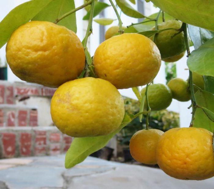 mandarin nasnaran