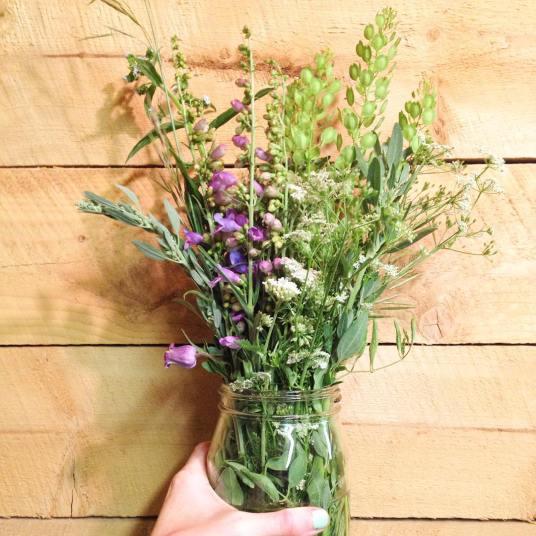 westcliffe colorado wildflowers