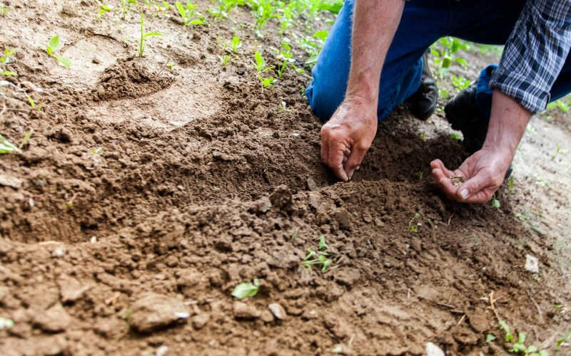 CHOLESTEROL, DIABETES, OBESITY AND THE SOIL
