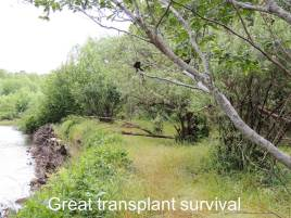 transp_survival_season1