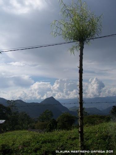 colombia venecia cerro tusa 2