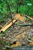 bosque en nuquí