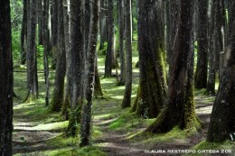 bosque verde 4