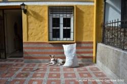 perro y pared amarilla