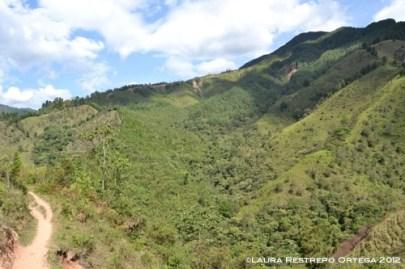 montañas y camino