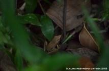 amphibians 2
