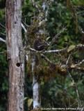 nido en un tronco 1