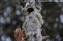 nido en un tronco 2