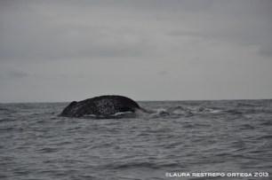 102 -ballenas 4