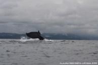 107 -ballenas 9