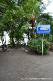 62 -tsunami