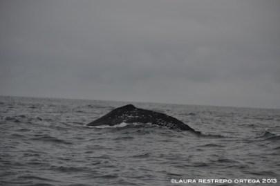 99 -ballenas 1