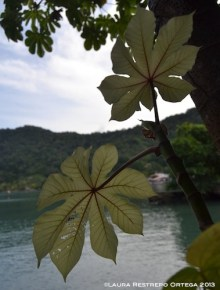 sapzurro 23 hojas